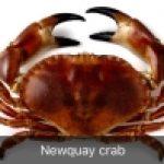 Newquay Crab